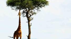 SEMANA SANTA EN SUDÁFRICA