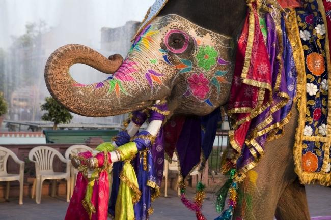 India con Festival Holi