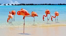 Aruba en Septiembre