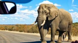 La Ruta Sudáfricana